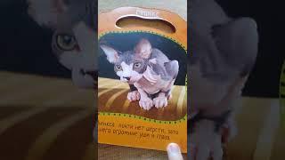 Информация а кошек.