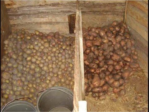 Как подготовить подвал для хранения картофеля