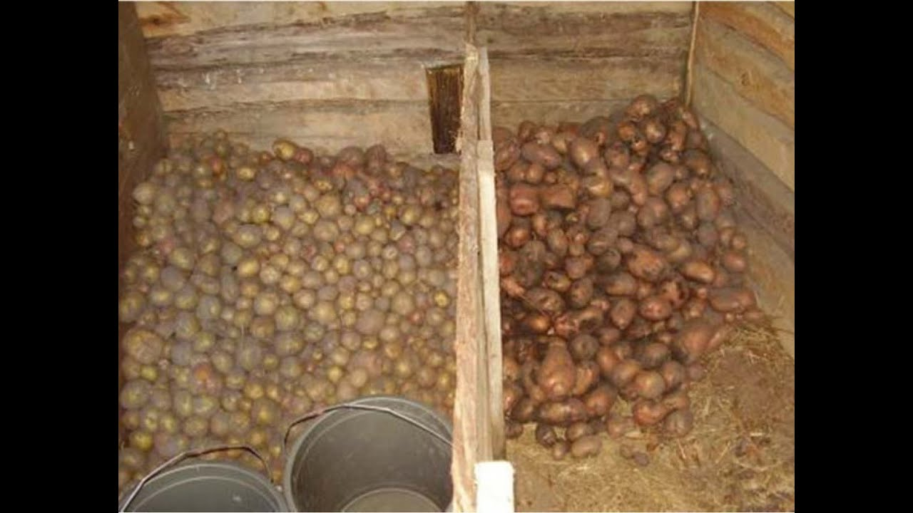 Ящики в подвале своими руками под картошку фото 37