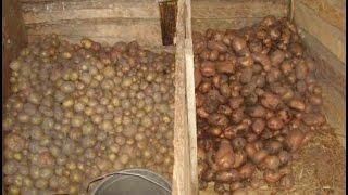 видео Как и где правильно хранить картофель?