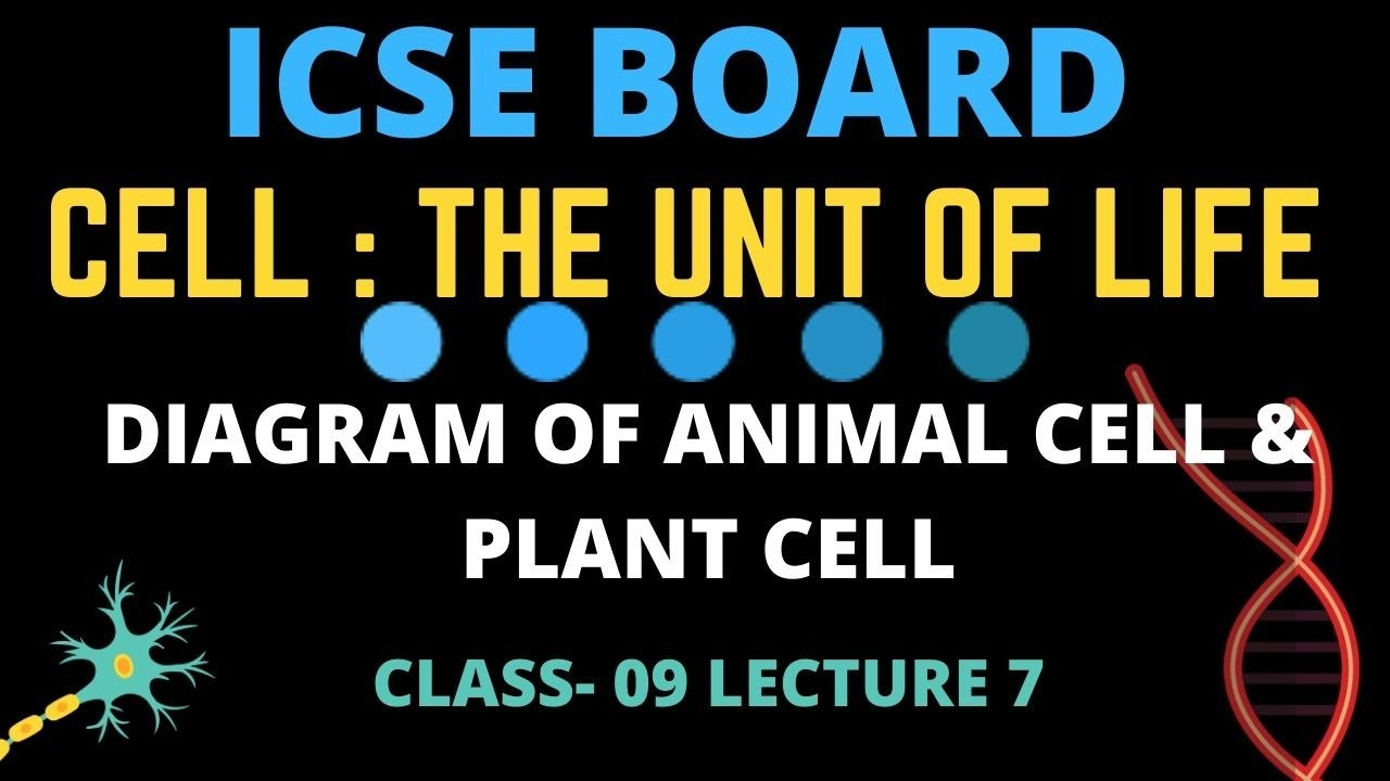 9th CLASS ICSE SCIENCE CHAPTER-01 THE CELL (DIAGRAM OF ...