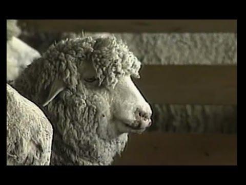 """""""Backroads of Montana: Episode 10 - Wool & Wind"""" (1997)"""