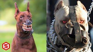 Ganas! 15 Ras Anjing paling Berbahaya Untuk Dipelihara Manusia, Jangan Remehkan kekuatannya..