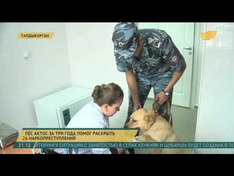 Служебные собаки помогают пограничникам и стражам порядка бороться с наркотрафиком
