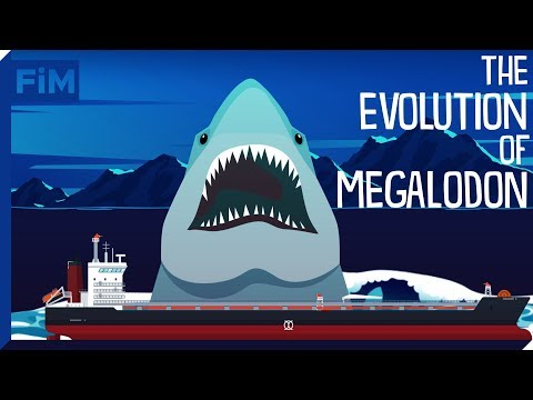 Thumbnail: The Evolution of Megalodon and it's Relation to the Great White