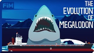 The Evolution of Megalodon and its Relation to the Great White