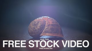 free  video stock footage -100fps / Snail covered in dust  and fire light effect | Makro Shot