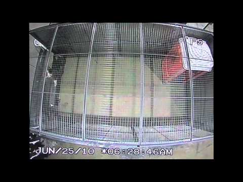 Police CCTV Footage of G20 Detention Center for the public record Part 6/6