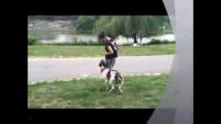 Instinct Dog Training Nyc | An Average Day At Instinct!