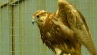 Живая энциклопедия - Про животных - Окский заповедник