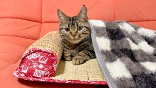 猫と飼い主が寝坊した朝のダメダメルーティンがこちらですw