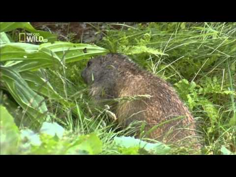 Facing The Atlantic   english Documentary National Geographic Wild Part 1