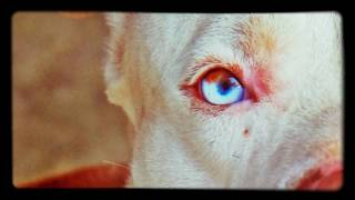 Friday the 13th turned this dogs brown eyes blue!