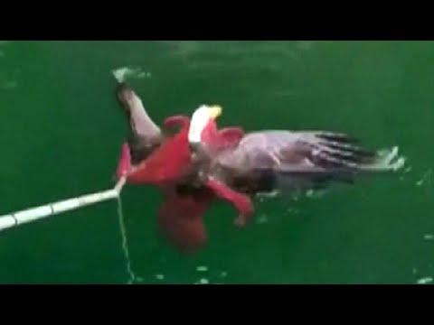 Jo Jo - The Things That Happen In The Water..