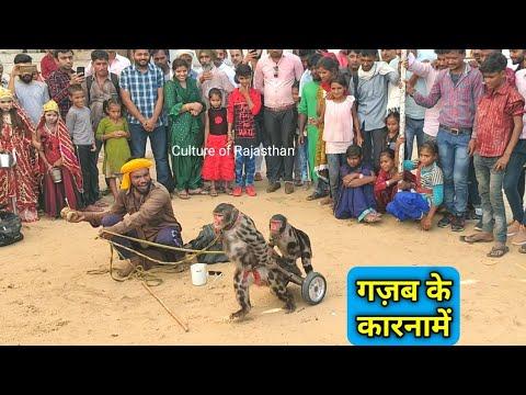 मजा आ गया भाई...Rajasthani bandar bandariya ka khel| Monkey drama