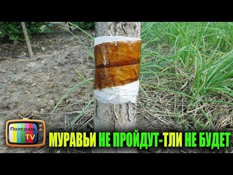 Вопрос: Как тля попадает на деревья?