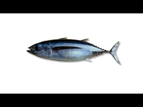 ධීවර කර්මාන්තය - The Fishing Industry