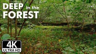 В глубине леса. Абсолютное спокойствие природы, почти статика.