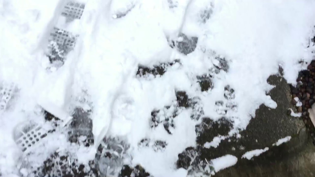 Introducing my bunnies to snow