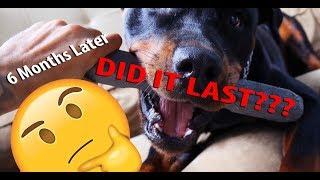 Ротвейлер непорушна іграшка для собак - 6 місяців - зробили це в минулому?