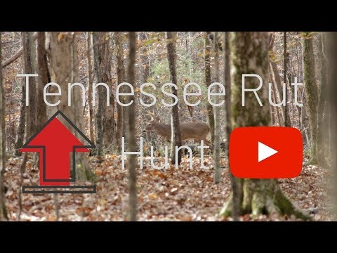 Tennessee Hunt- November Rutting Action