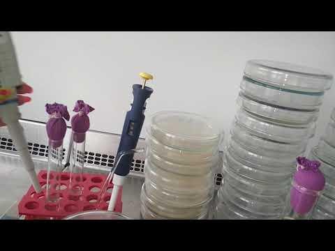 Видеоурок микробиология
