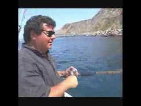 Sport Fishing With Dan Hernandez Episode 368 Part 3 Youtube