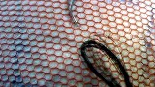 Baixar PART 1 - Ventilating with German needle - single knots, double knots, double split knots
