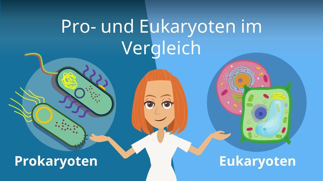 Prokaryoten 8