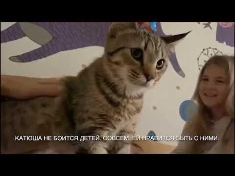 Видео отзыв из Тюмени. Пиксибоб Катюша Пиксихаус. Котёнок 2 недели в новом доме.