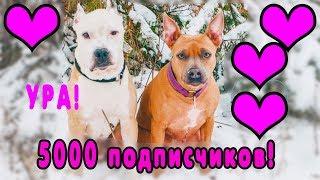 ИНТЕРВЬЮ ПИТБУЛЯ | 5000 подписчиков | дрессировка собак