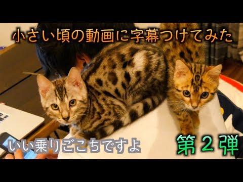 ルトとロゼの子猫時代の動画に字幕つけてみたよ!!part2