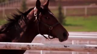 The Breeders- Alberta Breeders Fall Classic