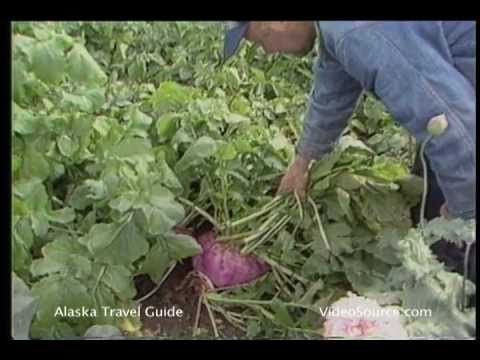 World's Largest Vegetables