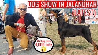 Latest DOG SHOW in Jalandhar (Punjab) | Cheapest Dog Market  All Puppy Dog Breed | Baadal Bhandaari