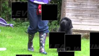 Residential Dog Training / Dog Boot Camp - Training Levels At Adolescent Dogs Uk