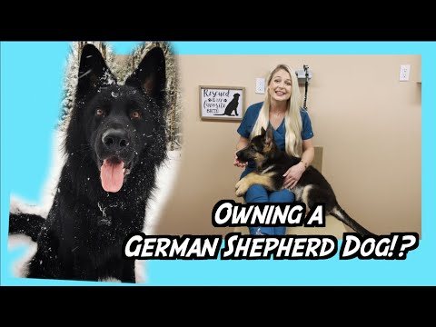 Owning A German Shepherd Dog !? | NEED TO KNOW!