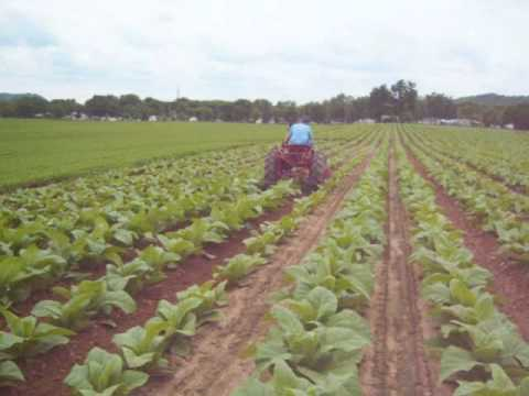 Schwenke Brothers- Cultivating Tobacco 2009