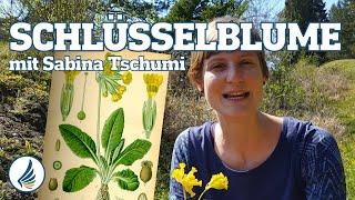 Schlüsselblume mit Sabina - Ausbildung Wildkräuterschule