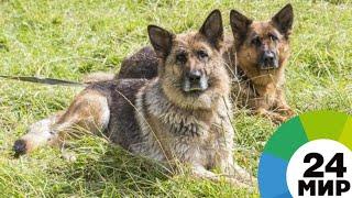 Мухтары на пенсии: как служебные собаки проводят старость - МИР 24