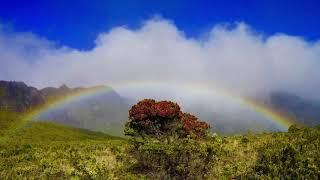 Baixar IZ Somewhere Over the Rainbow by Israel Kamakawiwo'ole Hawaiian Music Tropical Music