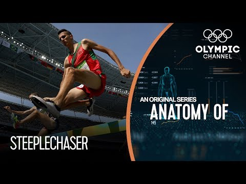 anatomy-of-a-steeplechaser:-how-their-physique-helps-their-stamina