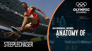 Anatomy of a Steeplechaser: How their Physique Helps Their Stamina