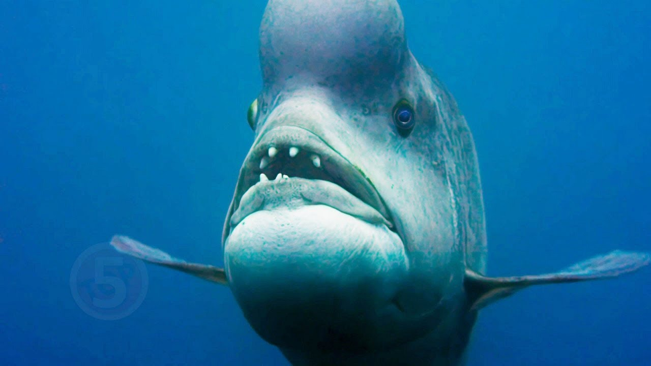7 Реальных животных-монстров, которые вас удивят