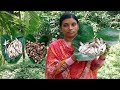 Kochu Tangra Macher Recipe | Village Style Delicious Fish Curry | Cooking By Street Village Food
