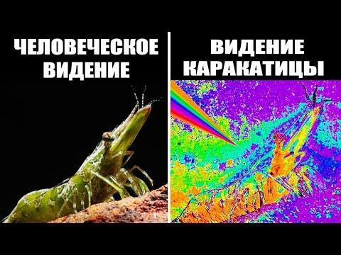 Вопрос: Каким образом насекомые видят этот мир?