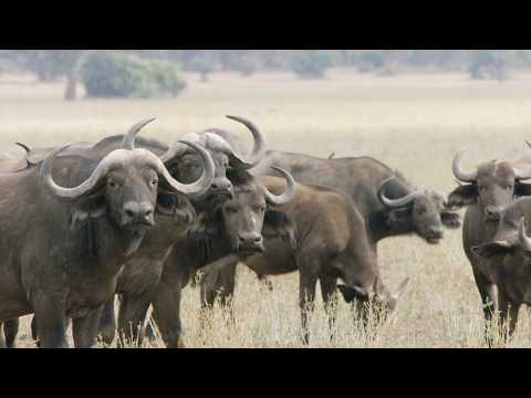 Visit the Lower Zambezi