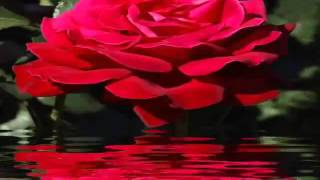 ♥ CHRIS NORMAN ~ BABY I MISS YOU ♥
