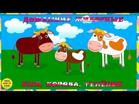Мультфильм про быка и корову