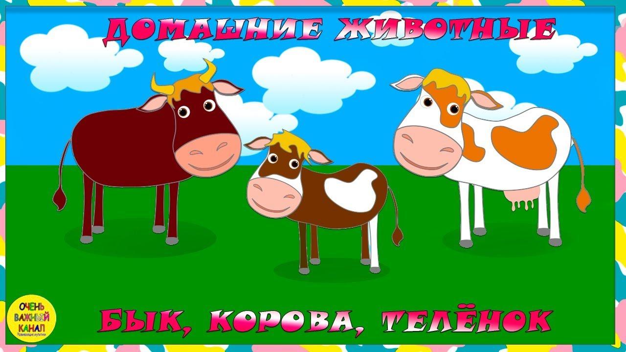 Учим животных: бык, корова и теленок! Развивающие ...